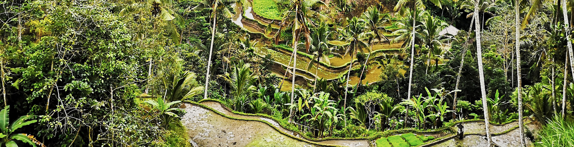 UBUD IN THE HEART OF BALI