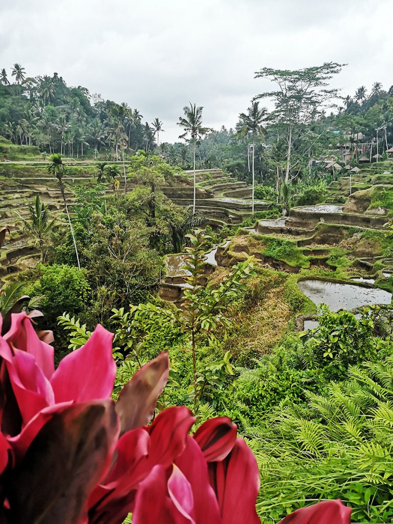 Tegallalang rice fields - Bali - Indonesia